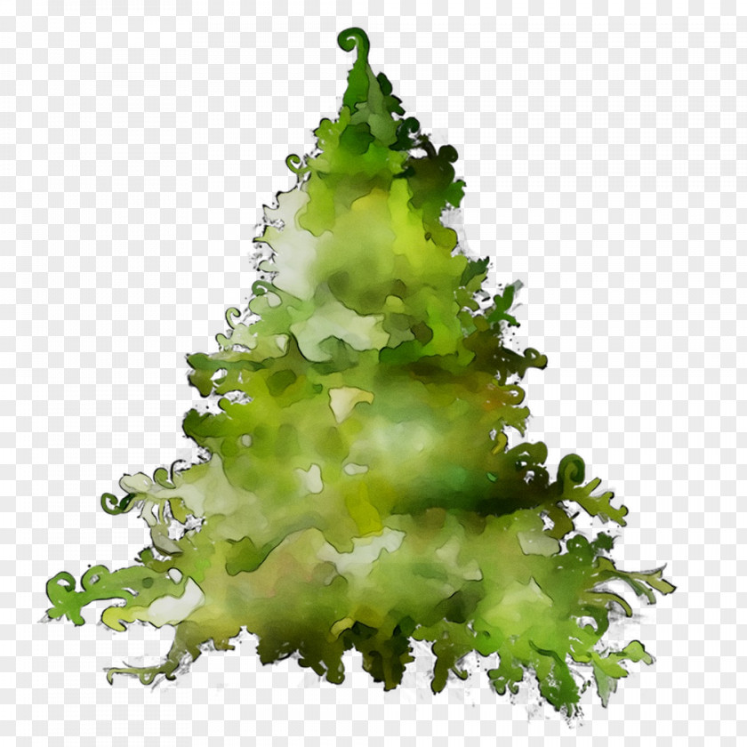 Greens Pine Family PNG