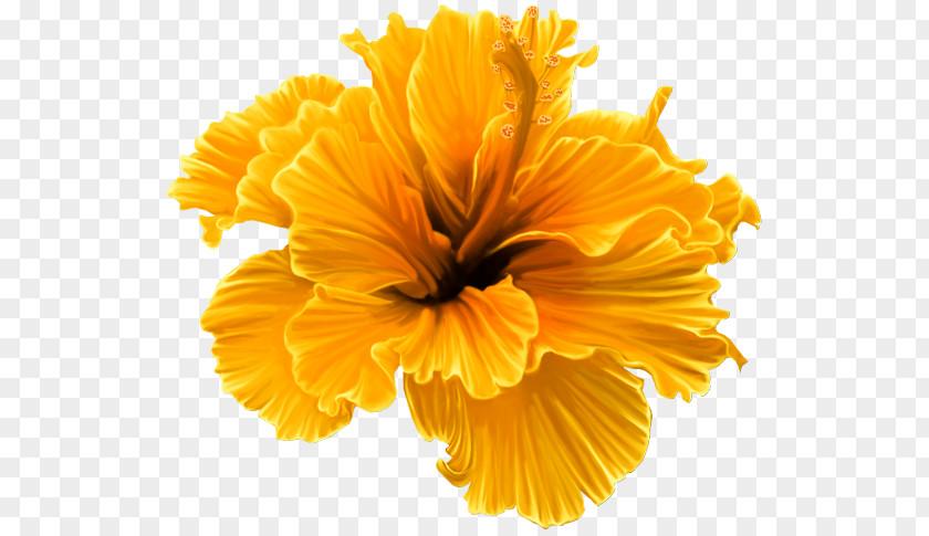 Flower Shoeblackplant Petal Clip Art PNG