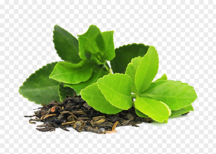 Tea Green Masala Chai Matcha Camellia Sinensis PNG